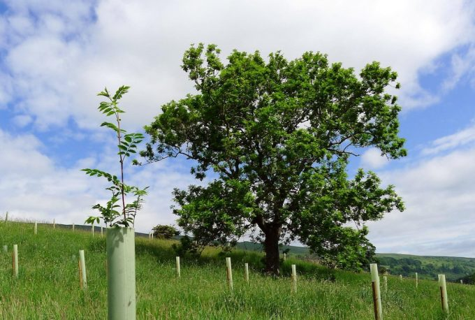 Longridge wood